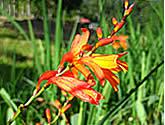 Flower trouvée dans le Quetzal's Trail