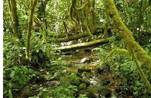 Trail Le Quetzal est plein de toutes les différentes nuances de vert