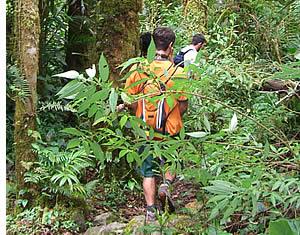 Sentier de randonnée pédestre le quetzal, un superbe randonnée dans les nuages le Chiriqu's Forest
