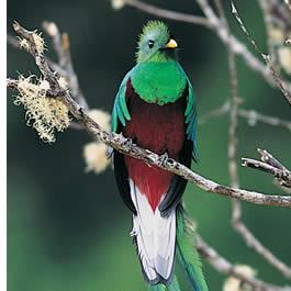 Dans nos visites guidées, nous avons repéré jusqu'à 14 quetzales en une seule journée